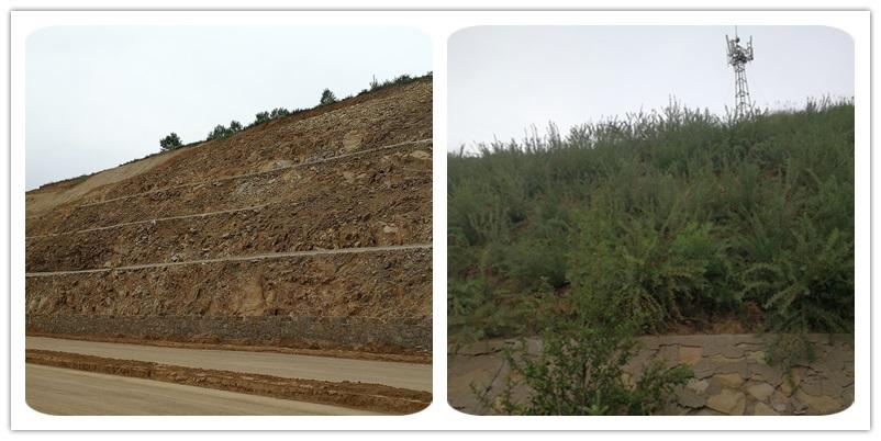 呼凉高速边坡绿化